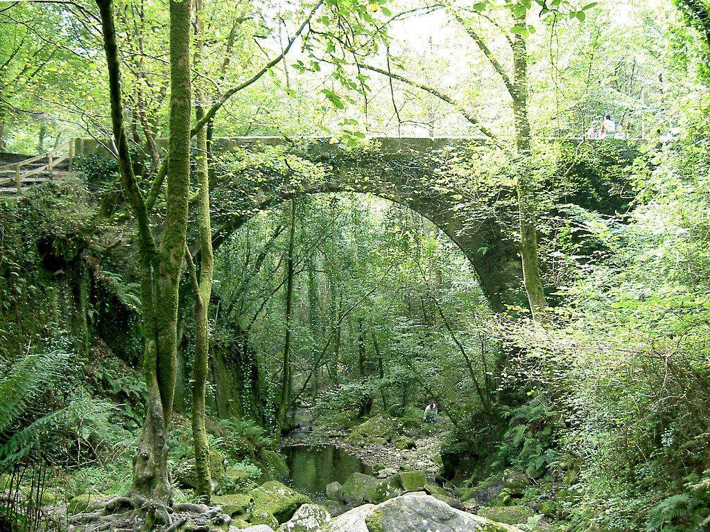 Puente y flora del entorno de las Fragas do Eume